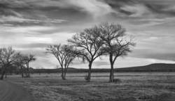 Company of Trees 1<br>Bosque del Apache NM 2008